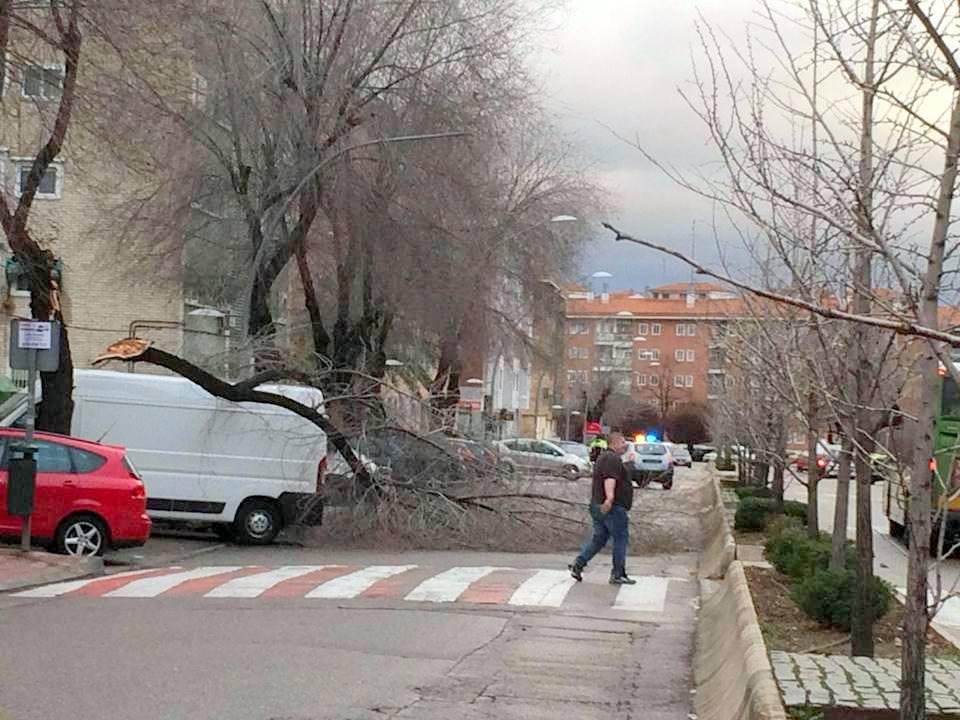 Llueve en San Fernando de Henares y como era de esperar….. Ha vuelto a ocurrir. Se caen los árboles y ramas de gran porte.