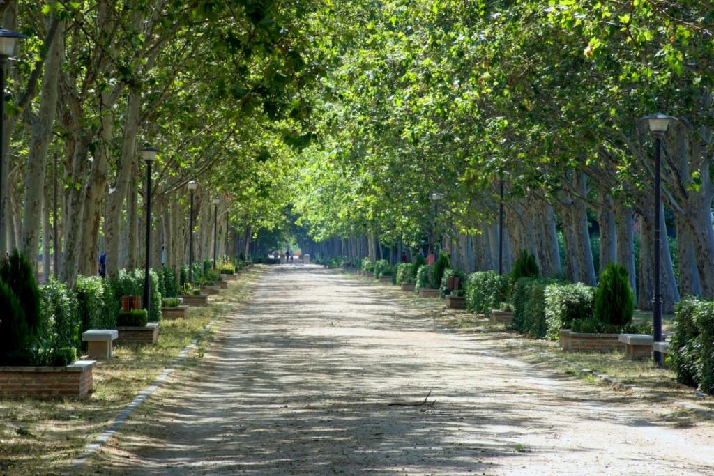 Paseo de los Chopos -San Fernando de Henares.