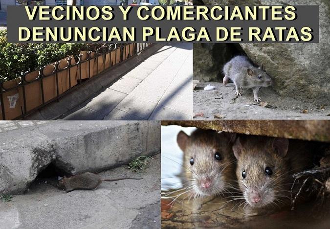 España2000, vecinos y comerciantes de la calle José Alix Alix y calles aledañas, denuncian una plaga de ratas en la zona.