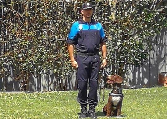 Coslada: La Sección Canina de la Policía Local refuerza y mejora su preparaciónen en la detección de drogas y estupefacientes.