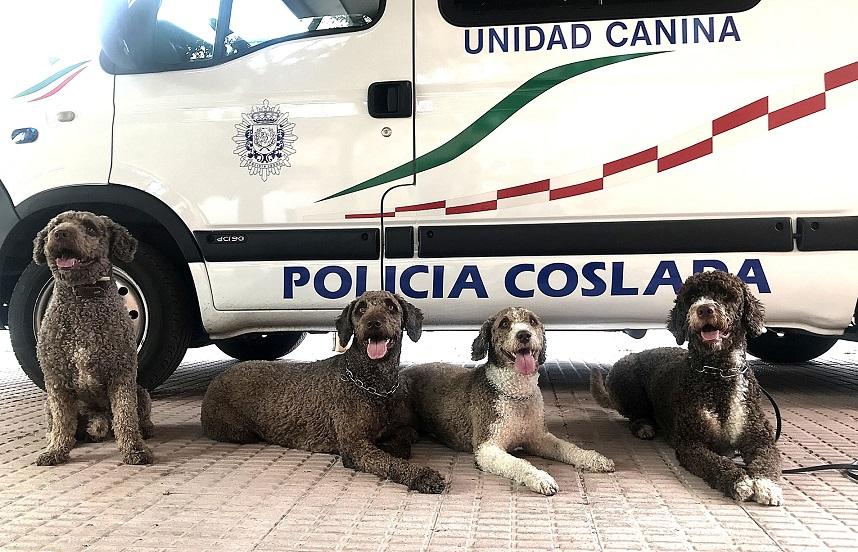 Coslada acoge un curso de formación de perros detectores de drogas y estupefacientes.