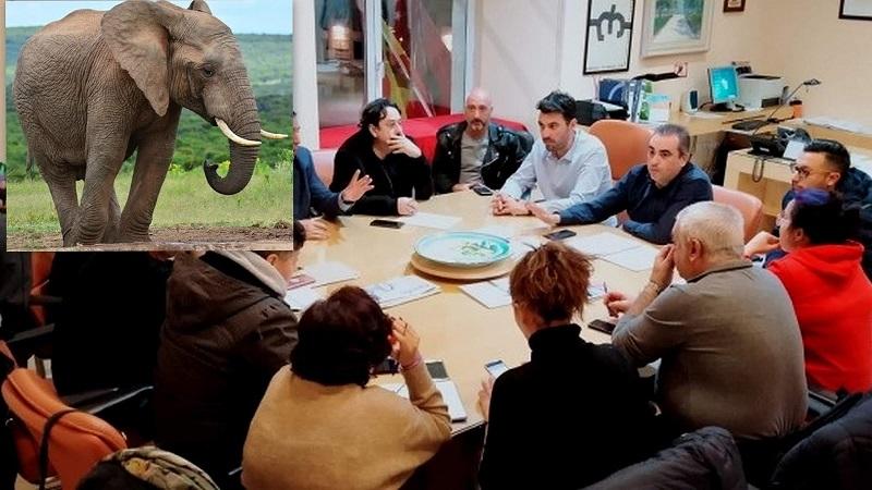 """Opinión .- As. C.C. El Molino de San Fernando: """"Un elefante en el Ayuntamiento I"""""""