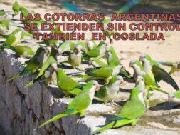 Portada Cotorras Argentinas
