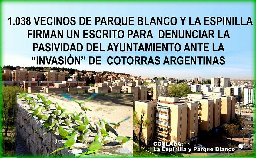 """Coslada:1038 vecinos de La Espinilla y Parque Blanco, firman un escrito denunciando la """" Pasividad"""" del Ayuntamiento ante la invasión de Cotorras Argentinas en sus Barrios."""