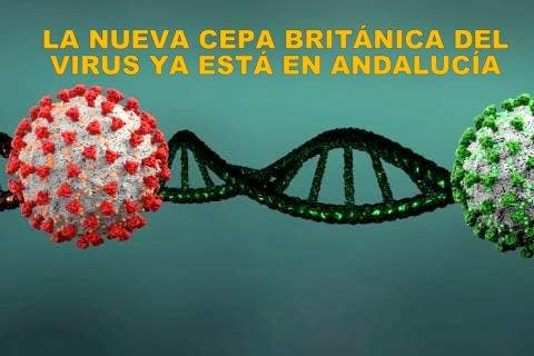 Cinco Nuevos casos detectados de la cepa británica del coronavirus en Andalucía.