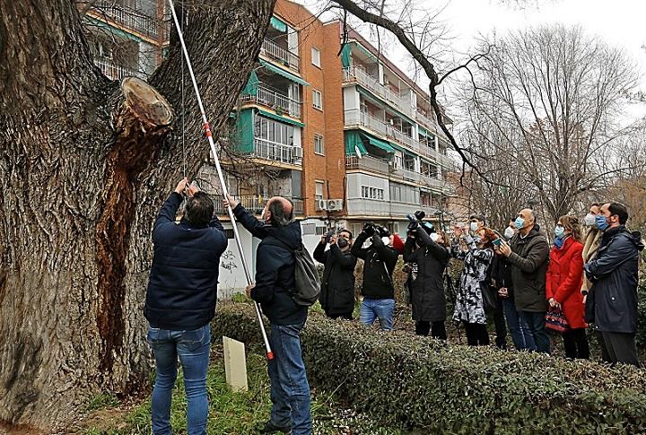 La Comunidad de Madrid Incluye un olmo centenario de Coslada, en el Plan de Clonación de ejemplares singulares de la Región.