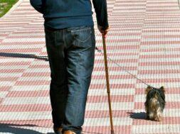 Portada -Cacas Perros –